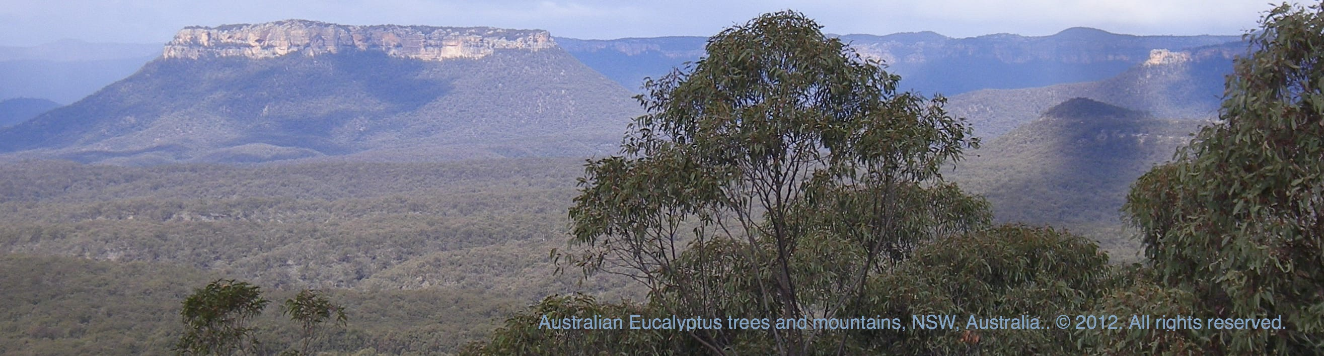 Picture - Australian Eucalyptus trees & Mountains in the Outback. ©.